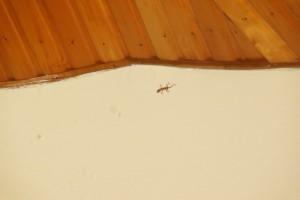My gecko